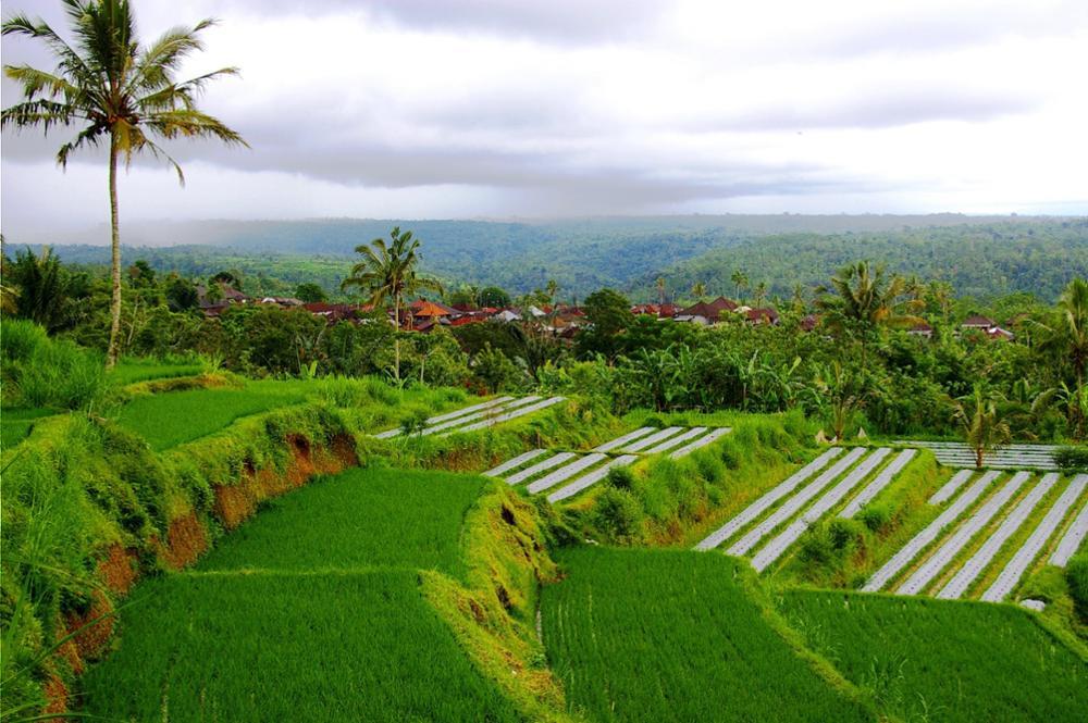 Des séjours authentiques avec le réseau de villages écotouristiques balinais
